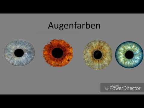 Warum Gibt Es Verschiedene Augenfarben? - Ein Schülerfilm