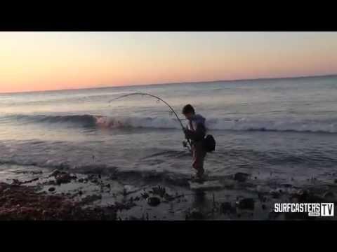 Junior Surfcaster Hooks And Lands A Large Bluefish