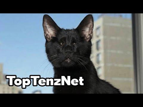 Top 10 Times A Cat Saved A Human Life