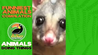 funny animals vines