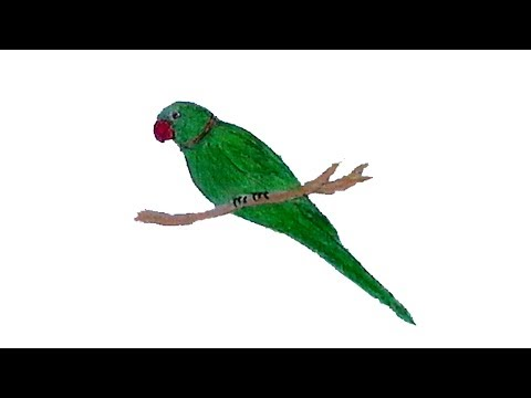 How to draw a parrot step by step a parrot। easy drawing parrot । draw  parrot picture