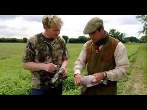 Pigeon - Gordon Ramsay - F Word