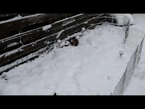 Midas in de sneeuw