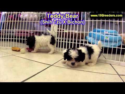 Golden Retriever, Puppies For Sale, In, Kent, Washington, WA, Bainbridge Island, Mercer Island, Mapl from YouTube · Duration:  48 seconds
