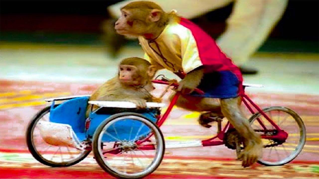 Con khỉ, xiếc khỉ - Nhạc thiếu nhi chú ếch con, con heo đất remix vui nhộn