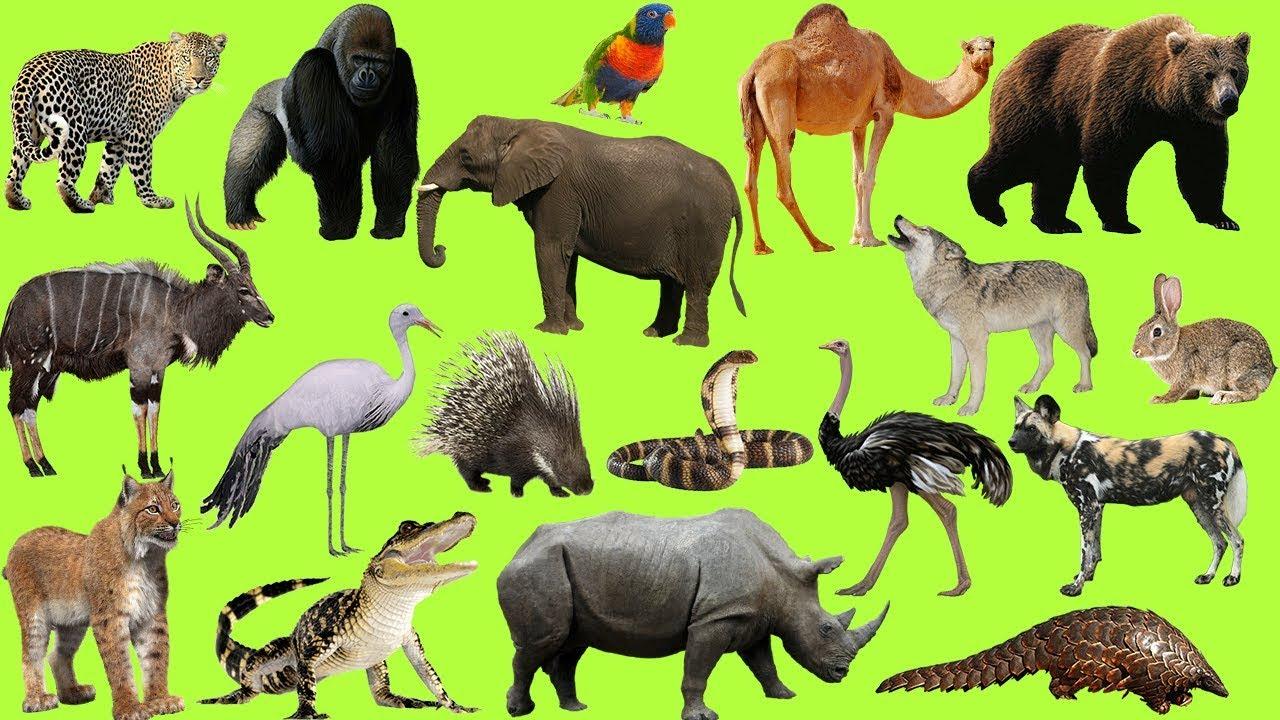 Дикие животные фото картинки для детей
