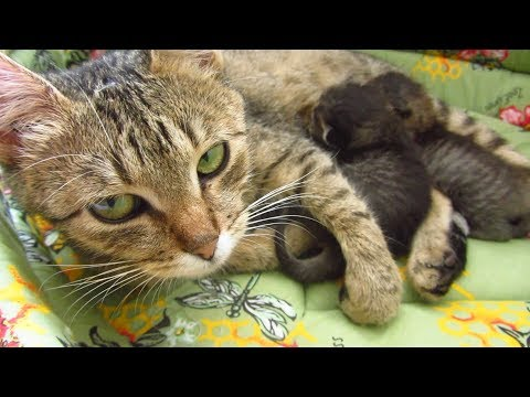 I rent the accommodation for mother cat with kittens