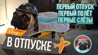 Мопс в отпуске / Полёт с собакой / Чубака заплакал! / Chubaka Vlog!