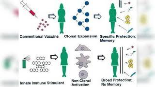 Bacillus subtilis reduces viral infectivity