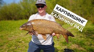Карпфишинг Рыбалка в Калининграде Ловля карпа сазана