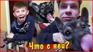 Что случилось с собакой Богдана?