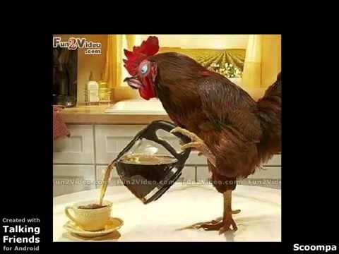 Funny Whatsapp Videos Good Morning - YouTube