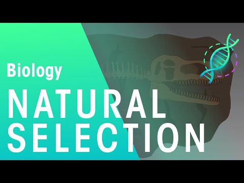 Evidence for Natural Selection | Biology for All | FuseSchool