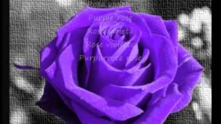 rosas de distintos colores