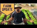 OUR FIRST BIG HARVEST OF 2018! // BIG POND FARM: UPDATE // SPRING IS HERE