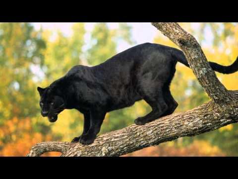 Самые красивые животные - Видео онлайн