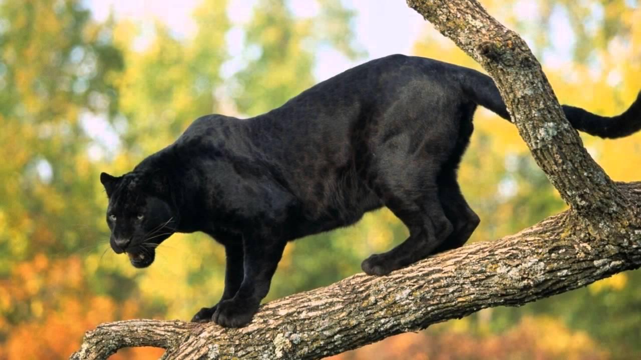 супер классные картинки с животными
