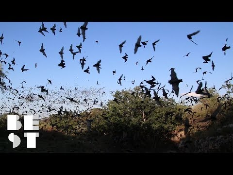 Try Not to Freak Out at This Bat Festival | Best Products