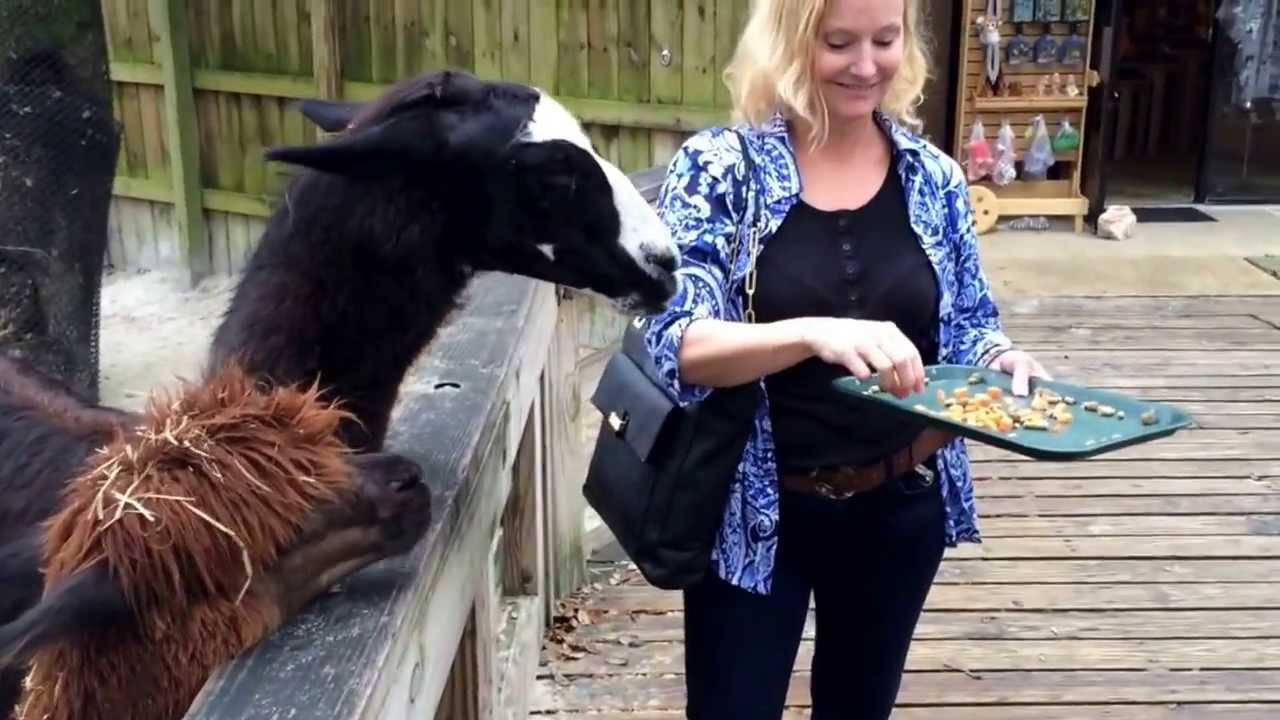 Download Llama spitting at me!