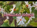 UNK | Importance Of Parijatha Flower |