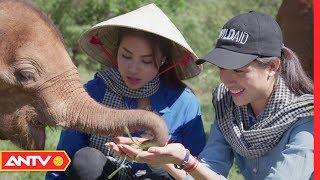 Hoa hậu Phạm Hương xót xa trước cảnh tượng đau đớn từ nạn săn bắt voi trái phép | ANTV