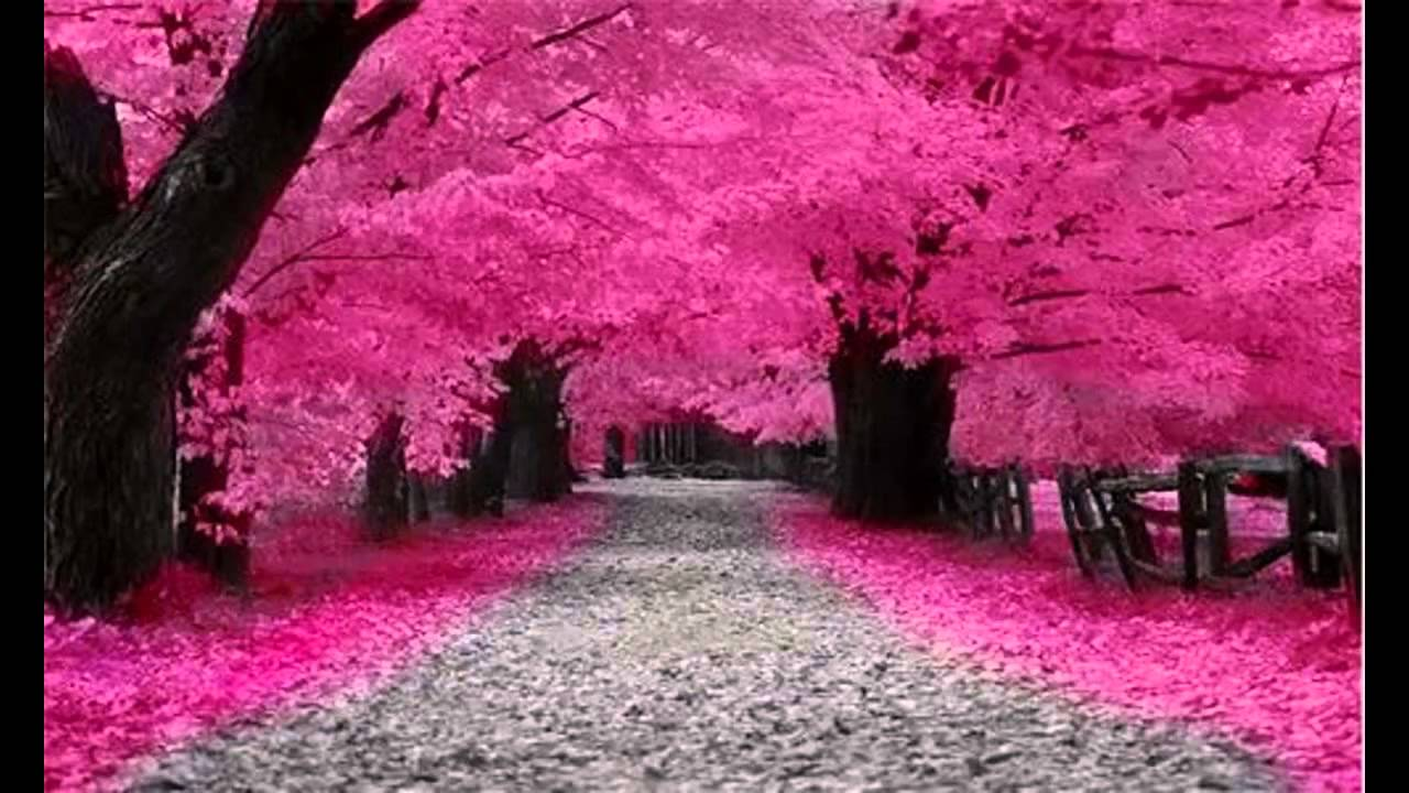 Image Result For Wallpaper Bunga Sakura