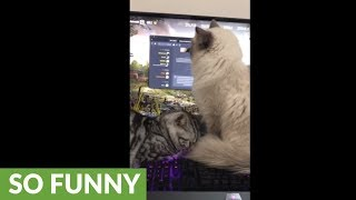 Kitties demand attention, take over the entire keyboard