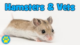 When To Take A Hamster To The Vets