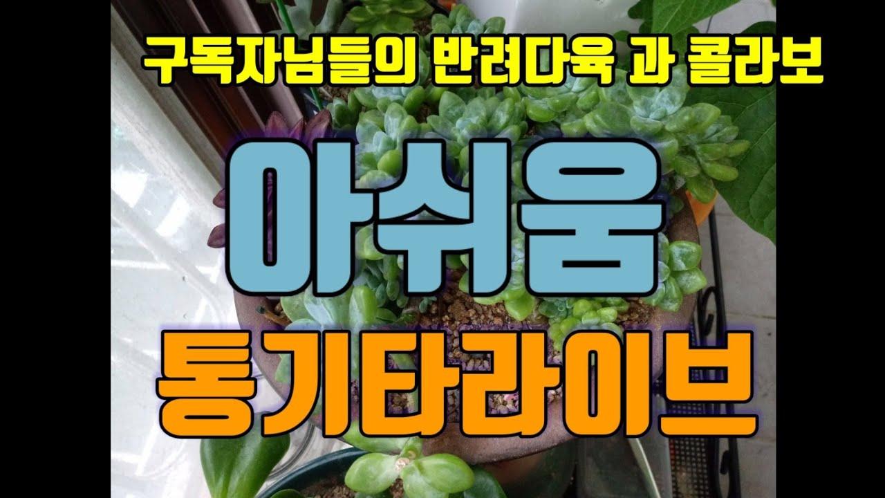 광고없이 4분 데이트 /구독자님의 반려다육 과 통기타 라이브 /아쉬움(신촌블루스)