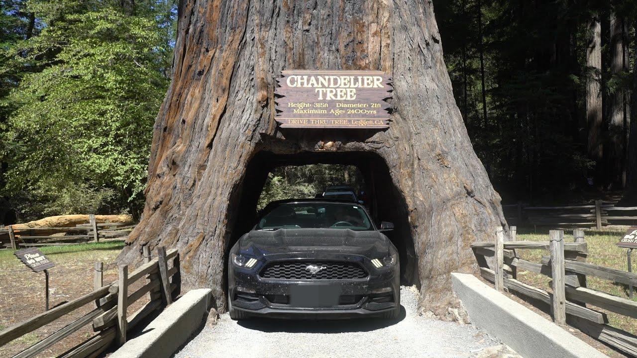 Chandelier tree at home and interior design ideas elegant drove my car through a tree arubaitofo Gallery