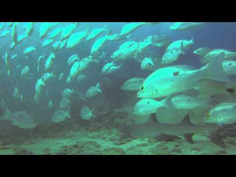 Diving with sharks, Caño Island, Costa Rica