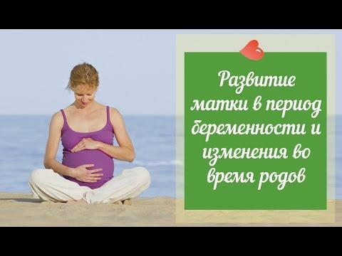 Увеличение матки - academ-