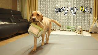 배꼽시계 달린 강아지 | 알아서 척척척!!! | 자기 …