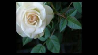 Candileja - Musica Instrumental solo para romanticos