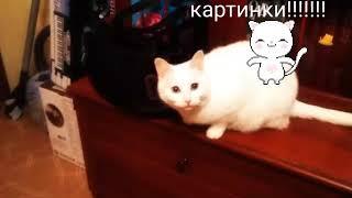 Плюсы и минусы заводить кошку