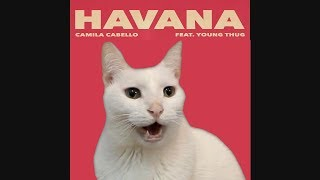 HAVANA - Camila Cabello by CATS Despacito Shape of you More BEST Hits - Cat Parody