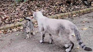 【感動】野良猫のママ猫をナデナデしたら逃げていった子猫を呼び戻してくれた