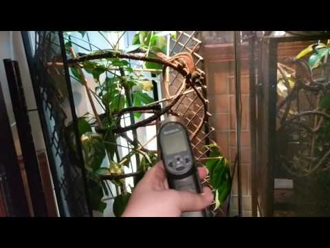 How to take care of Panther or Vieled Chameleons: husbandry and care!!