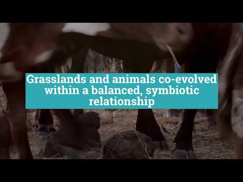 How Cows Can Save the Planet in 90 Seconds