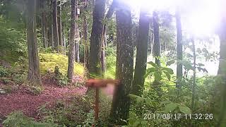 駒ヶ根高原リゾートリンクス敷地内の森に現れた子ザルです。16秒までです。