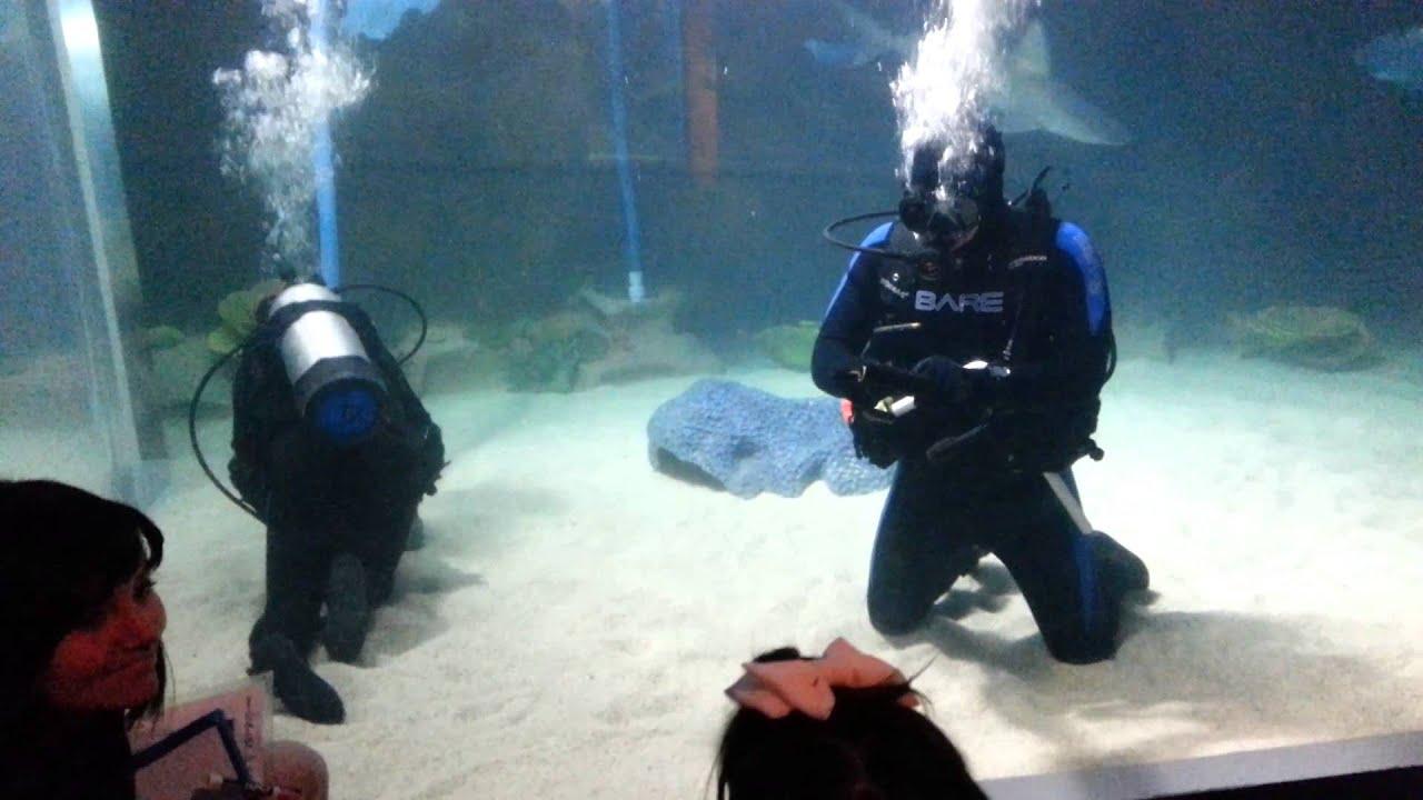 Stella and diver george at the cleveland aquarium youtube stella and diver george at the cleveland aquarium xflitez Choice Image
