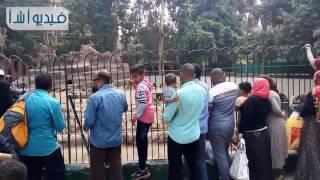 بالفيديو زحام علي بيت السباع وجبلاية القرود بحديقة الحيوان في ثاني ايام العيد