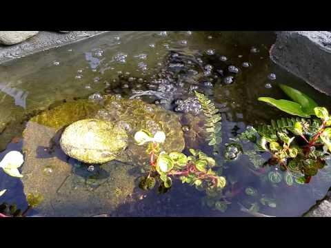 Download 80 Gambar Kolam Ikan Hias Sederhana HD Terbaru
