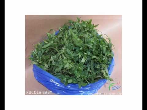 Fresh Herbs Catalog Flora Export SG Israel (HD)