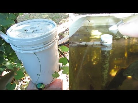 Aquaponic plumbing, How the water flows through our IBC system.