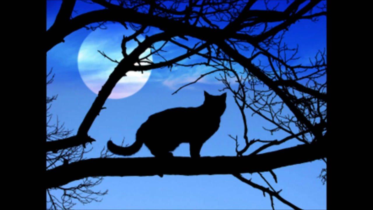 Musta Kassi Kuu : Anu anton musta kassi jenka chords chordify