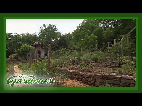 Terraced Vegetable Garden | Volunteer Gardener
