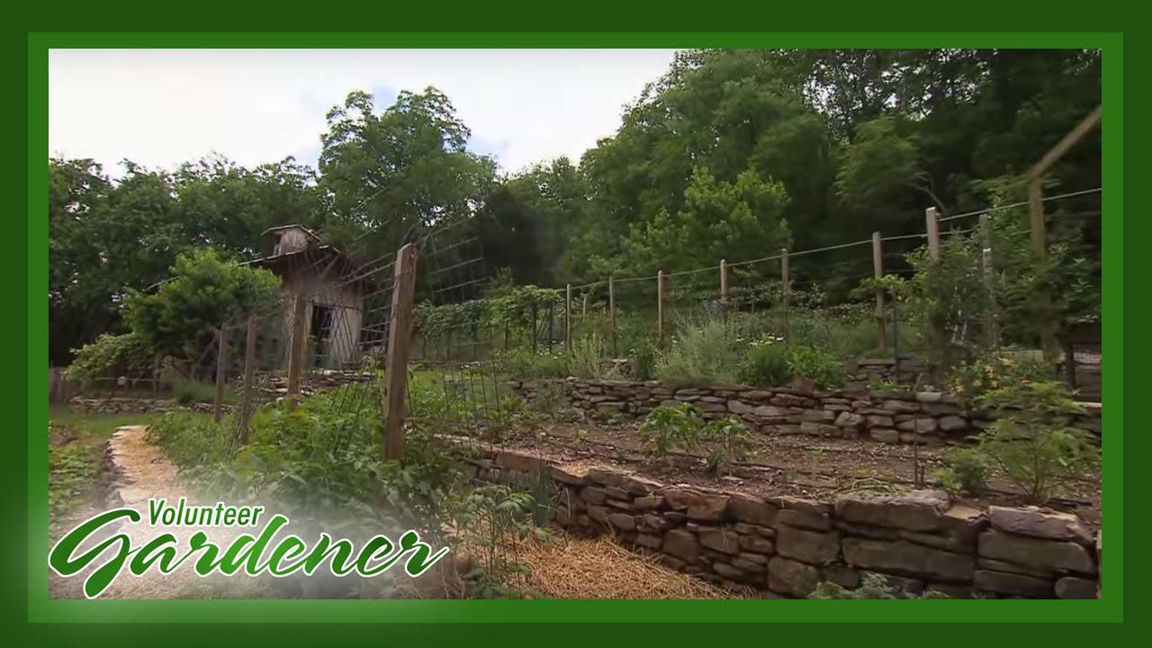 Terraced Vegetable Garden Volunteer Gardener