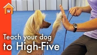 Teach Your Dog to High-Five