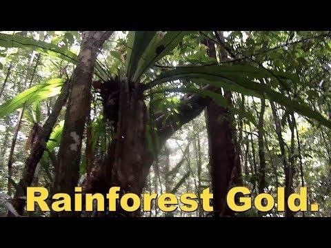 Rainforest Gold Australia